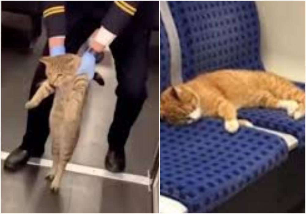Atrapan a un gato que se 'coló' en un tren porque viajaba sin boleto