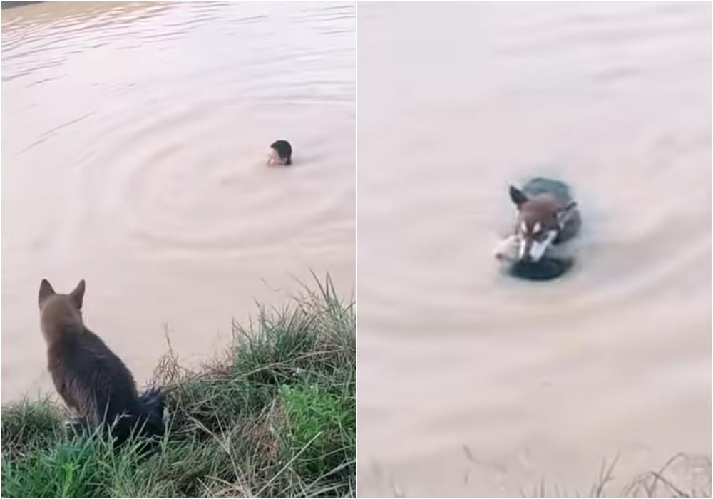Video: perro salva a su dueño que se estaba ahogando y se vuelve viral