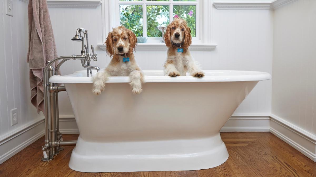 Tips para la limpieza de la mascota